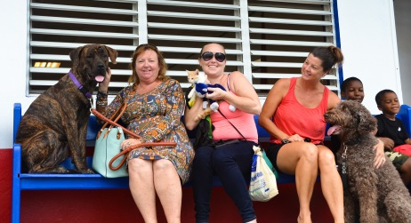 St. Thomas, U.S. Virgin Islands, Sept. 28, 2019 -- Angela LaPlace and her 10-month-old Mastiff Scarlett, Angela's daughter Hannah LaPlace and her kitten Lily, and Angel Dubovoy and her Labradoodle Kohko wait for their pets' wellness checks during the Humane Society of St. Thomas' disaster preparedness event at the Frenchtown Community Center. The Society offered free wellness checks to the first 300 animals brought to the event. FEMA/Eric Adams